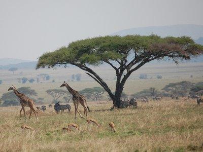 Africa_Sma..n_plain.jpg