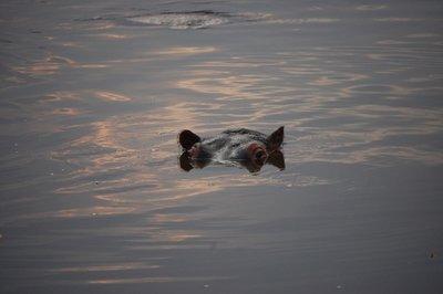 Africa_Sma..po_eyes.jpg