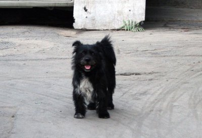 Happy_dog.jpg