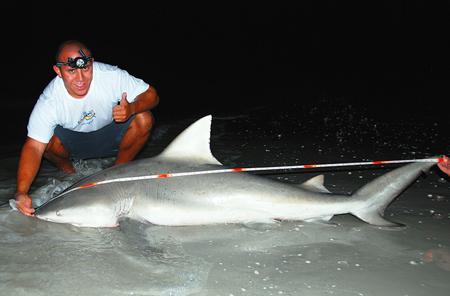 Bull Shark caught on Sanibel Island April 2008