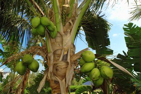 coconuts-2