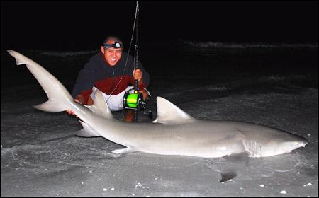 Lemon Shark caught on Sanibel Island in April 2008