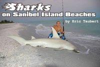 Sharks on Sanibel Beaches Worry Tourists