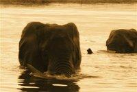 Elephant_Wate.jpg