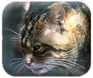 www.wildcatseo.co.uk