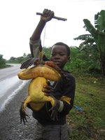 Boy Selling Goliath Frog - for food