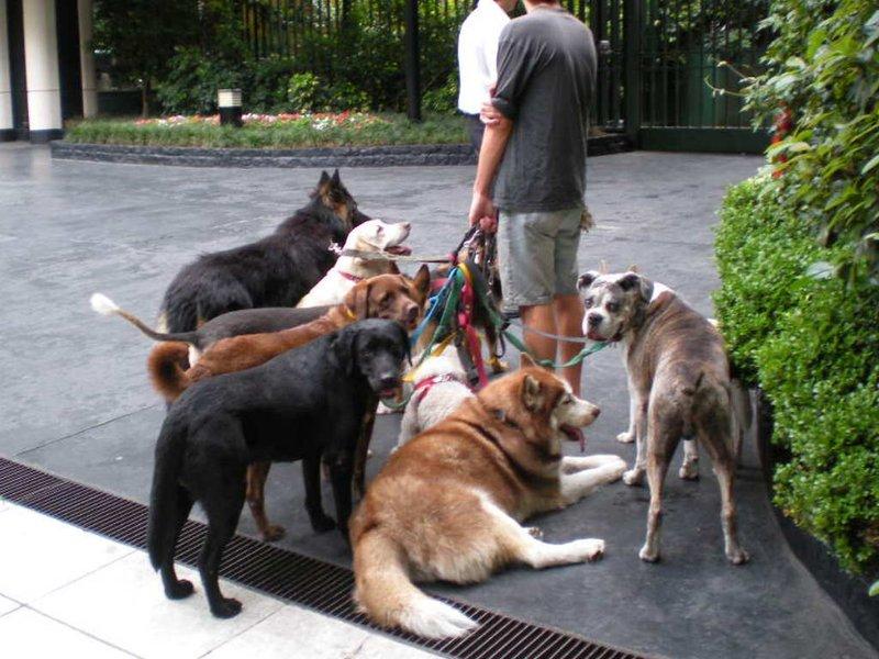 BA: dogs