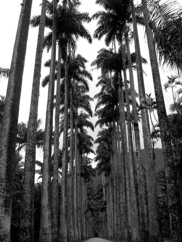 Rio De Janeiro: palms in the park