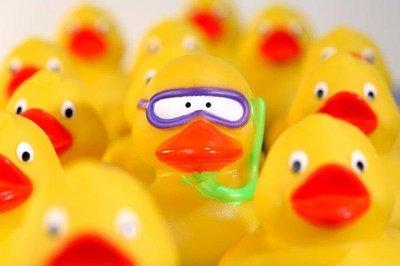 rubber_ducks.jpg