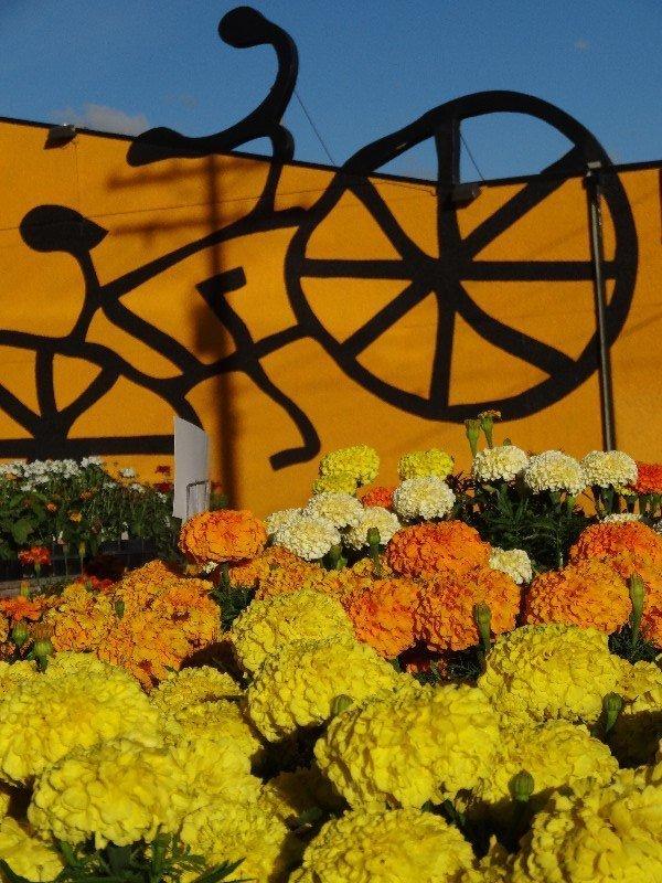 Amarillo en Winnipeg