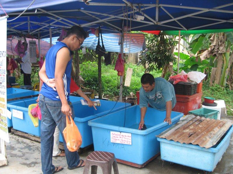 Fresh water fish sales