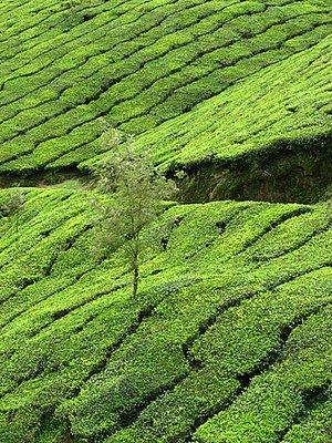 Indien_2008_1144.jpg