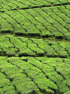 Indien_2008_1154.jpg