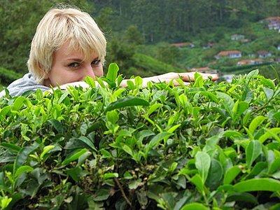 Indien_2008_1161.jpg