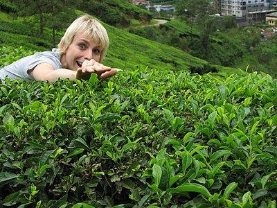 Indien_2008_1162.jpg