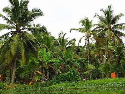 Indien_2008_886.jpg