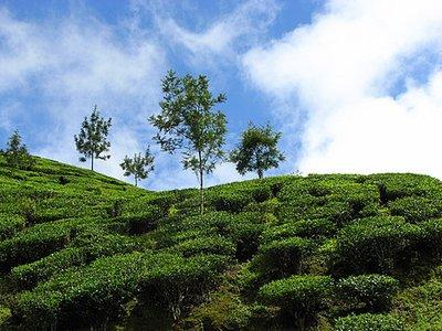 Indien_2008_989.jpg