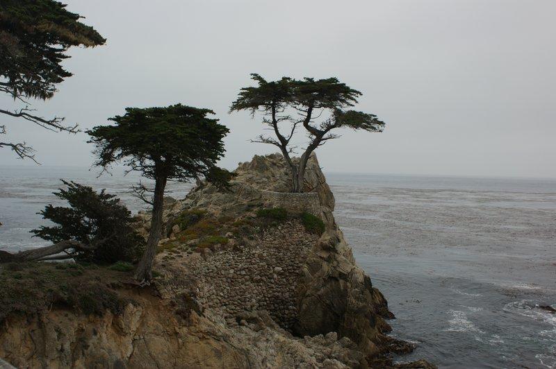 CYPRESS TREE AT PEBBLE BEACH CA