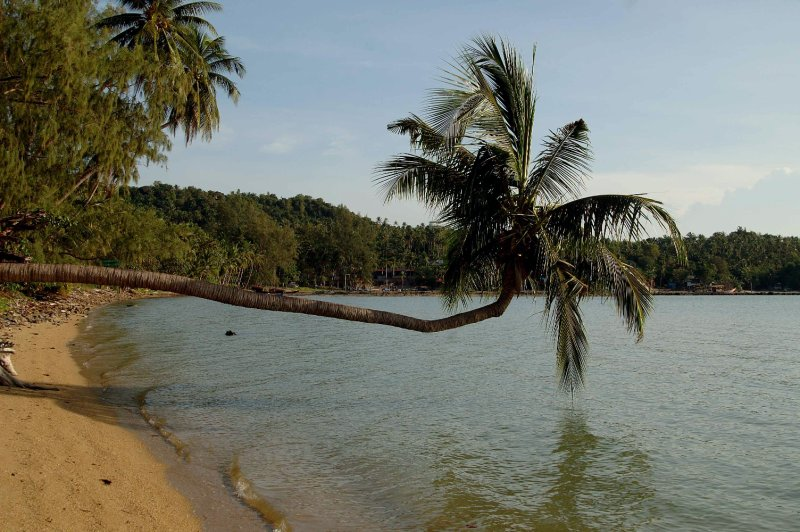 palm in the beach