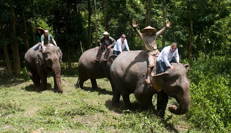 Elephant-Project55