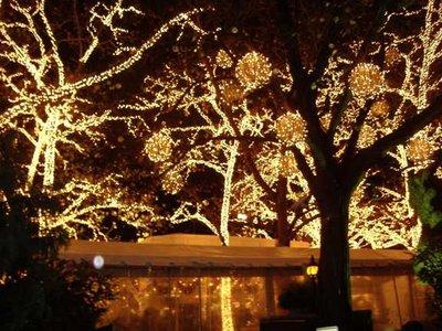 2006 11 22.. Lights.JPG
