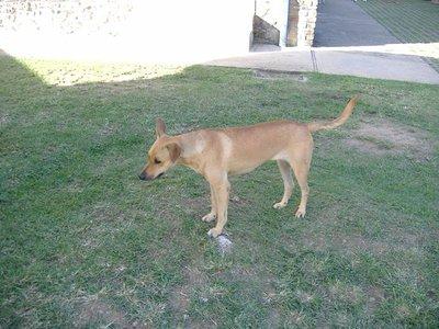 2007_11_20_D01_Dog.jpg