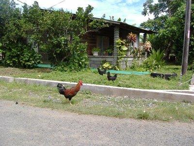 2007_11_C04_Chicken.jpg