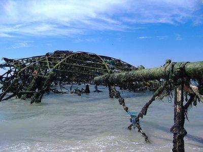2008_07_24..Seaweed.jpg