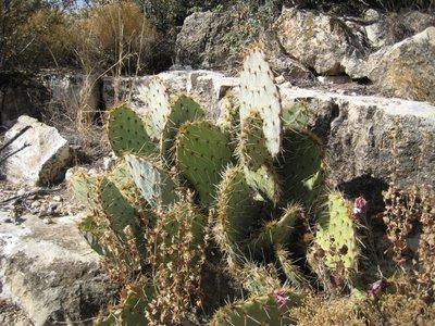 2008_11_22.._Cactus.jpg