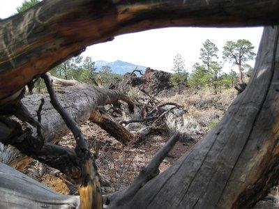 2008_11_22..en_Tree.jpg