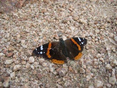 2008_11_28..tterfly.jpg