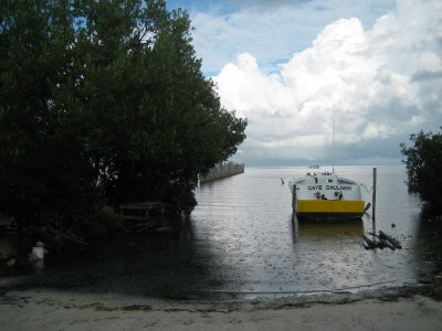 Caye Caulker boat, trees and deep blue water