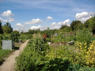 Allotment_Gardens.jpg