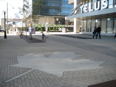 C12_Maple_Leaf_Square.jpg
