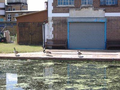 Geese_on_R..ratford.jpg