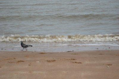 J010_Bird_and_Beach.jpg