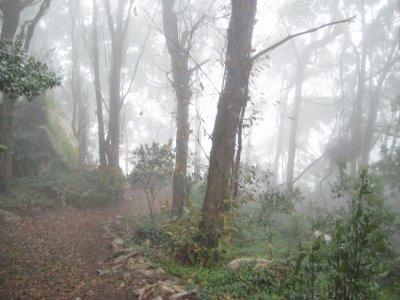 Misty_Path..astle_1.jpg