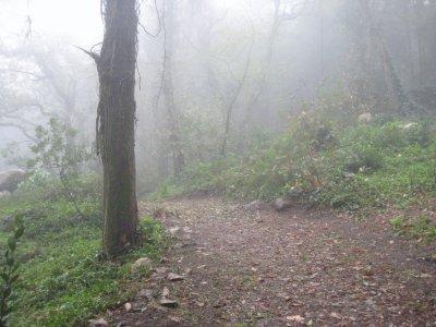 Misty_Path..astle_2.jpg
