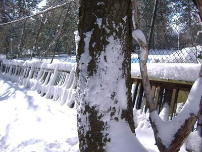 Snow_Tree_Trunk.jpg