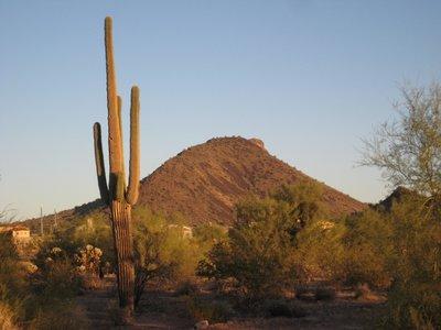 TP_Cactus_..ountain.jpg