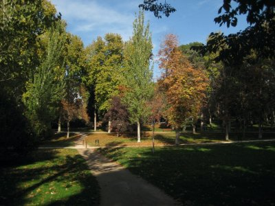 Trees turning in Parque de El Retiro