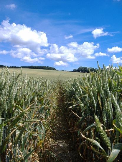 Green Fields Path in close