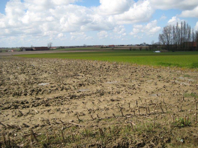 Muddy Fields in Passendale