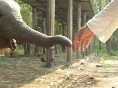 Elephant Handshake. Photo by FiColes