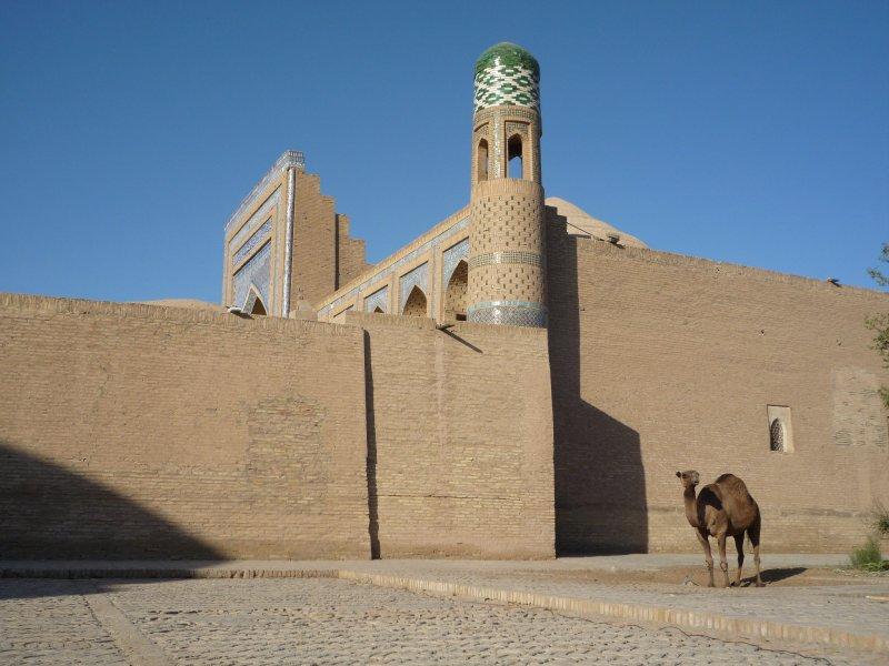 Camel in Khiva