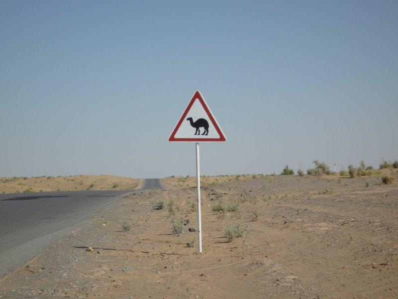 Beware Camels!