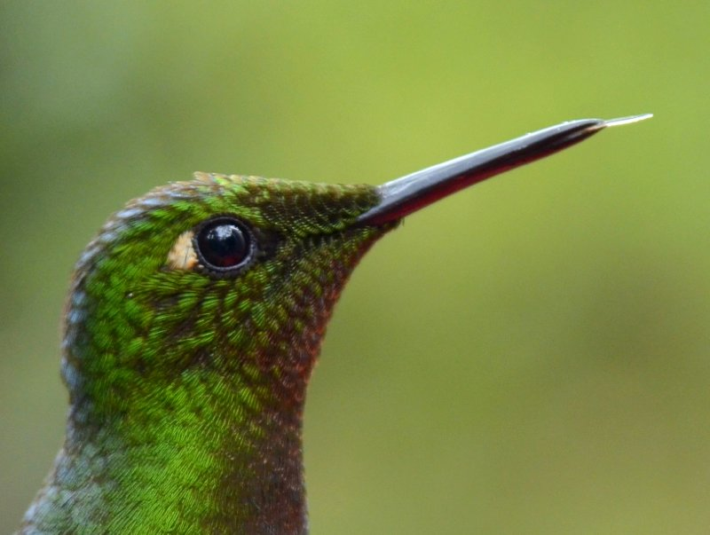 hummingbird in Cocora valley