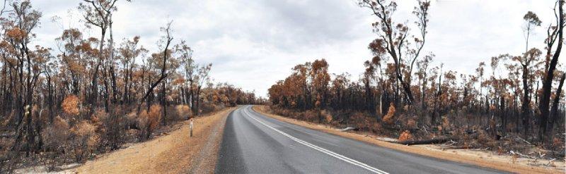 verbrannte wälder