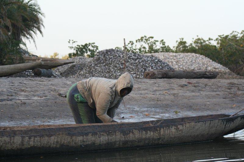 Mangrove Oyster Fisherman