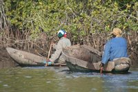 Mangrove Oyster Fishermen